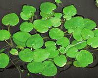 Image Floating Plants