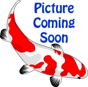 Image Alpine Filter Sponge for PLF2000 & 3000